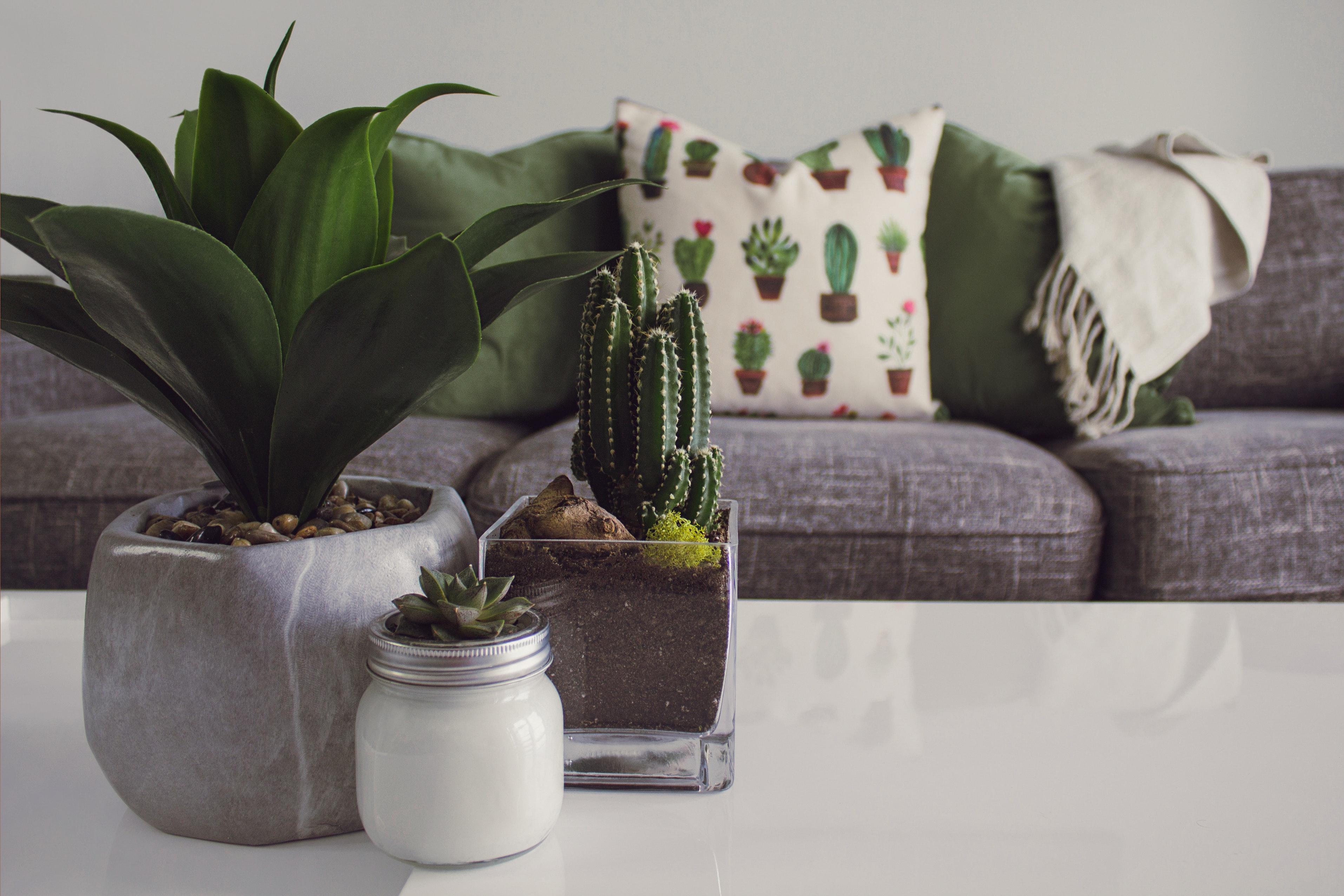 plants in rental