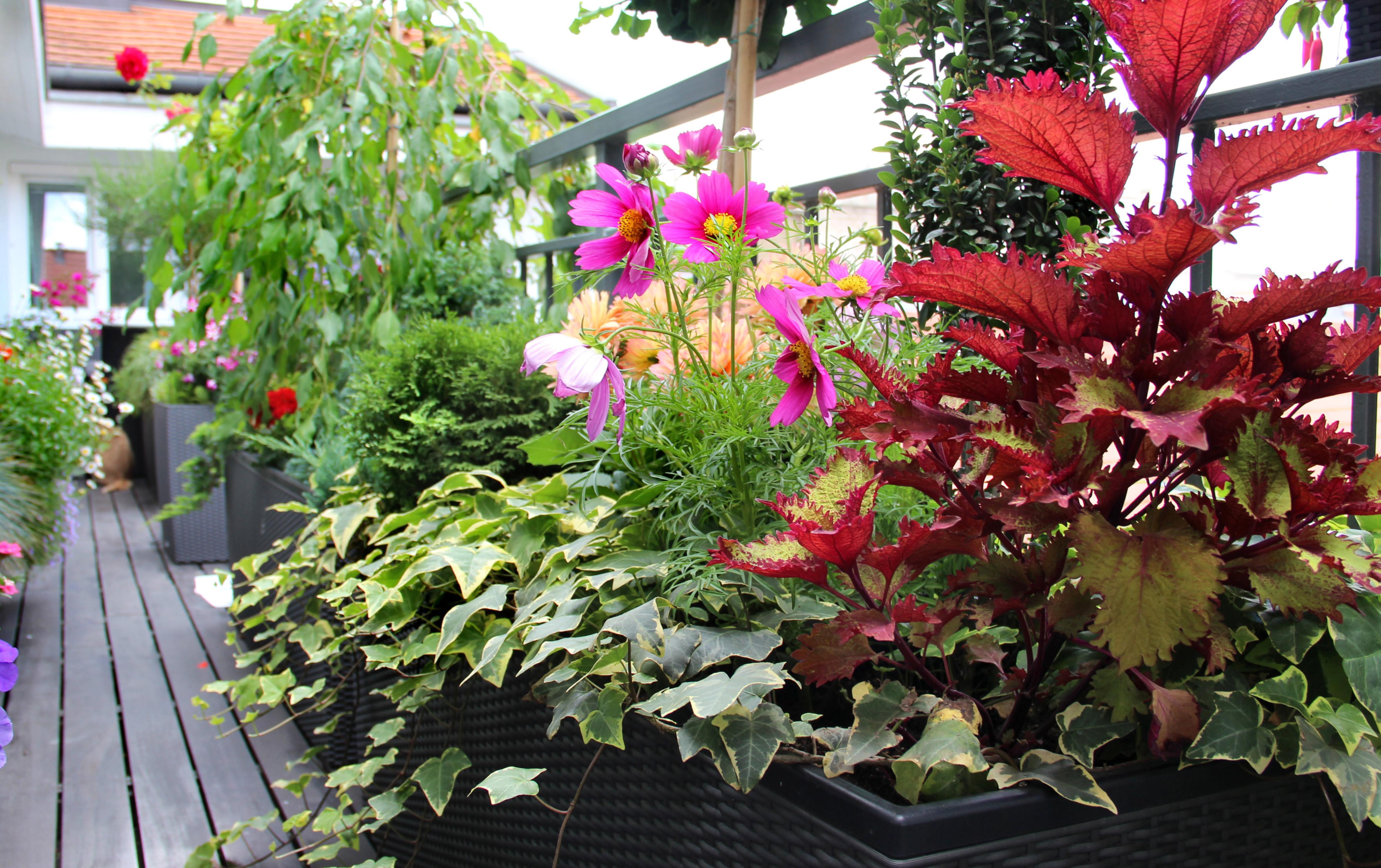 Garden plantings on balcony